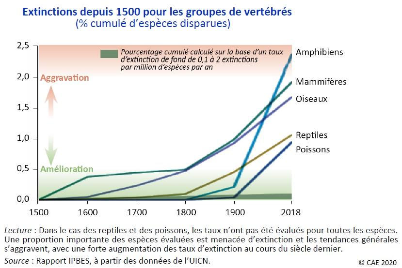 Extinctions des espèces depuis 1500 pour les groupes de vertébrés